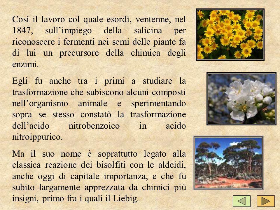 Così il lavoro col quale esordì, ventenne, nel 1847, sullimpiego della salicina per riconoscere i fermenti nei semi delle piante fa di lui un precursore della chimica degli enzimi.