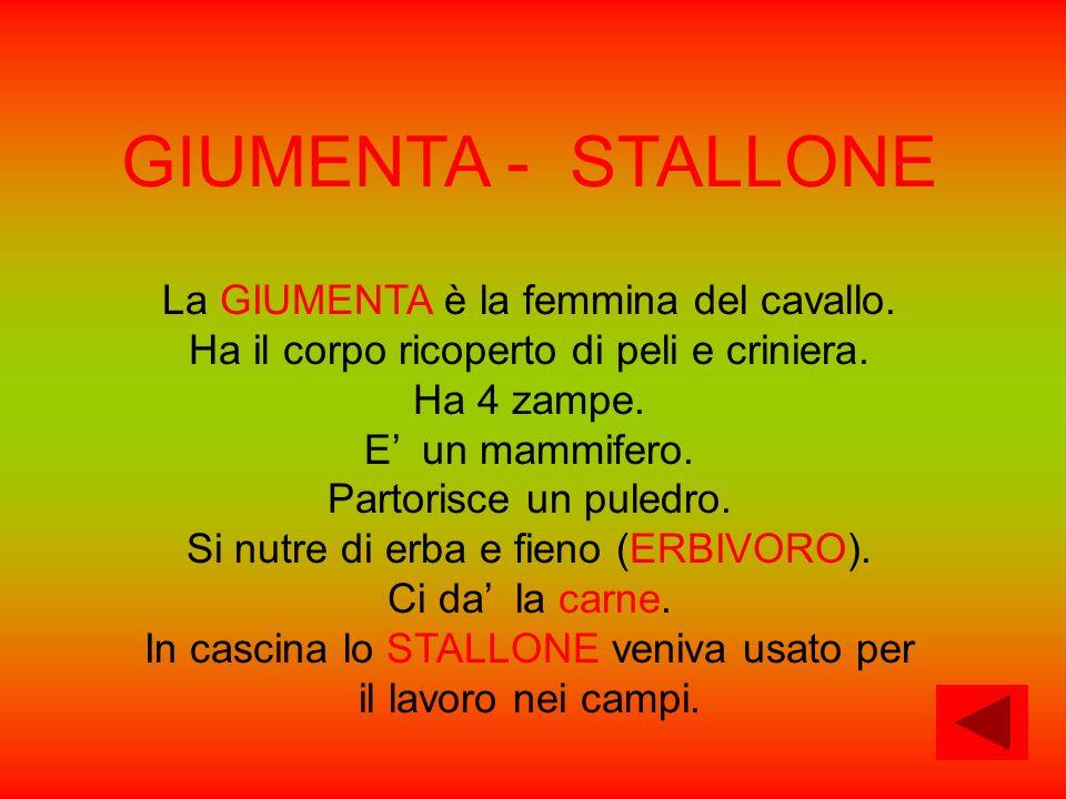 GIUMENTA - STALLONE La GIUMENTA è la femmina del cavallo. Ha il corpo ricoperto di peli e criniera. Ha 4 zampe. E un mammifero. Partorisce un puledro.