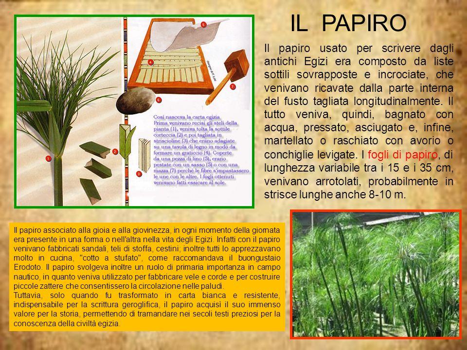 Inserisci immagini sulle piramidi IL PAPIRO Il papiro usato per scrivere dagli antichi Egizi era composto da liste sottili sovrapposte e incrociate, c
