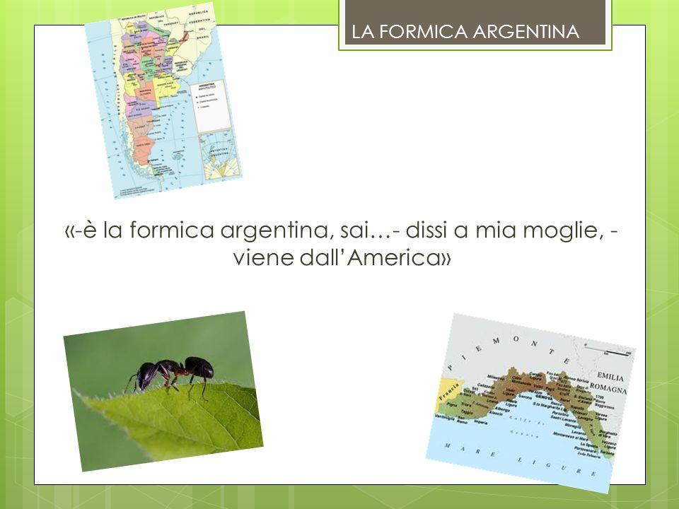LA FORMICA ARGENTINA «-è la formica argentina, sai…- dissi a mia moglie, - viene dallAmerica»