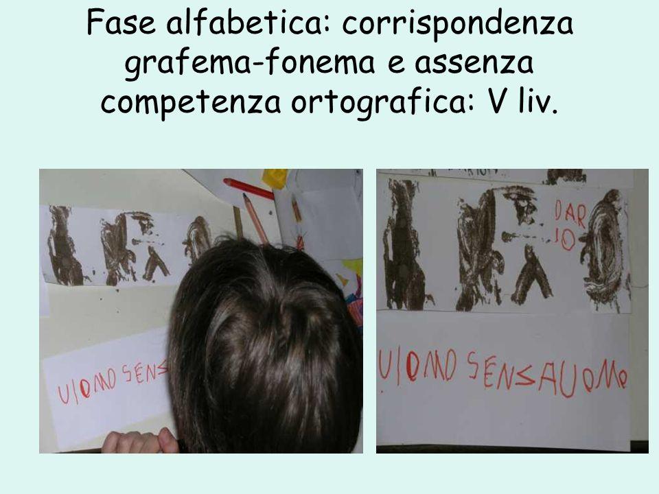 Fase alfabetica: corrispondenza grafema-fonema e assenza competenza ortografica: V liv.
