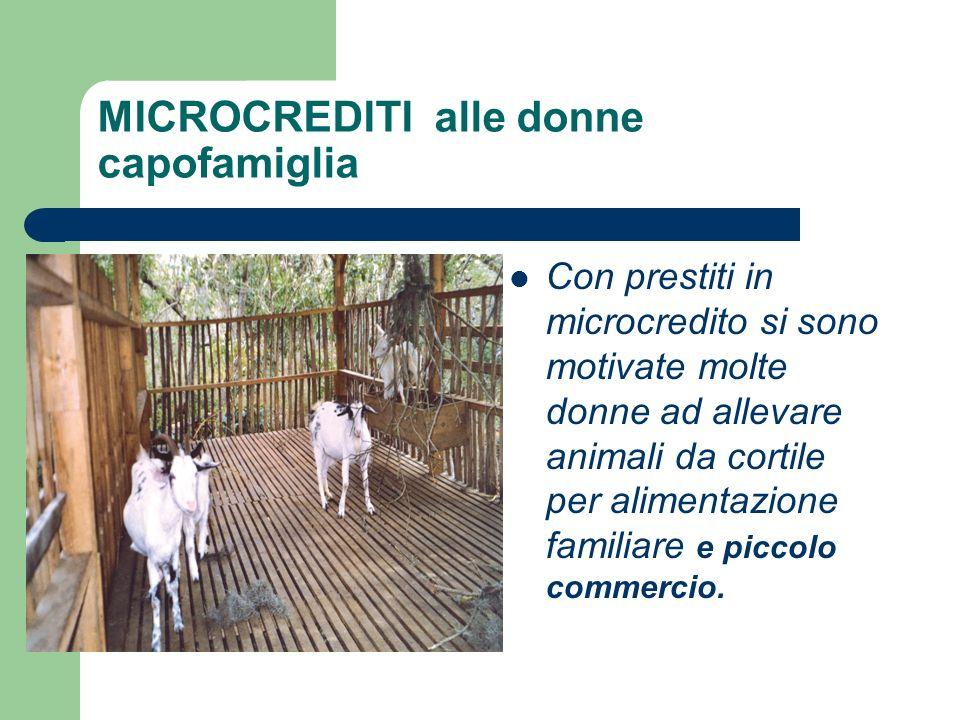 MICROCREDITI alle donne capofamiglia Con prestiti in microcredito si sono motivate molte donne ad allevare animali da cortile per alimentazione famili