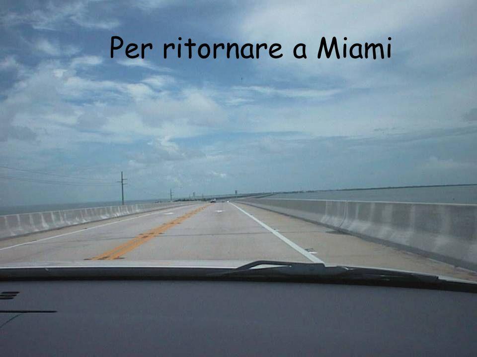Per ritornare a Miami