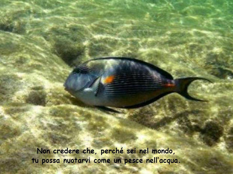 Non credere che, perché sei nel mondo, tu possa nuotarvi come un pesce nellacqua.