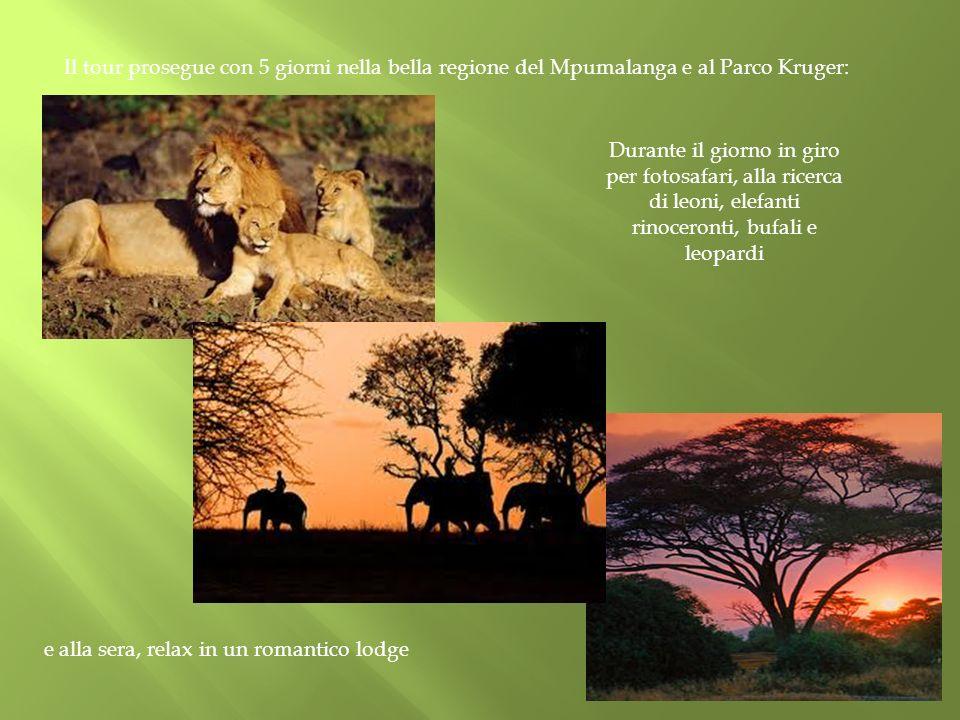 Il tour prosegue con 5 giorni nella bella regione del Mpumalanga e al Parco Kruger: Durante il giorno in giro per fotosafari, alla ricerca di leoni, e