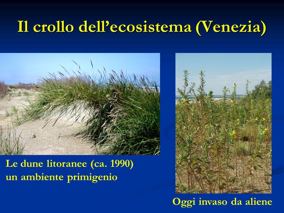 Il crollo dellecosistema (Venezia) Le dune litoranee (ca.