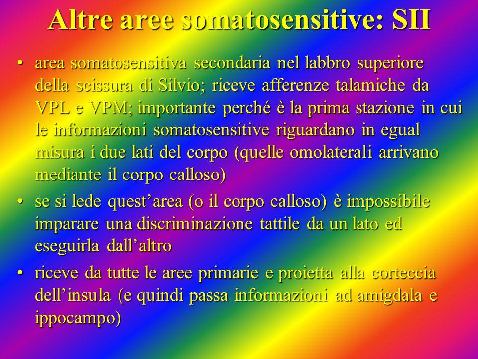 Altre aree somatosensitive: SII area somatosensitiva secondaria nel labbro superiore della scissura di Silvio; riceve afferenze talamiche da VPL e VPM