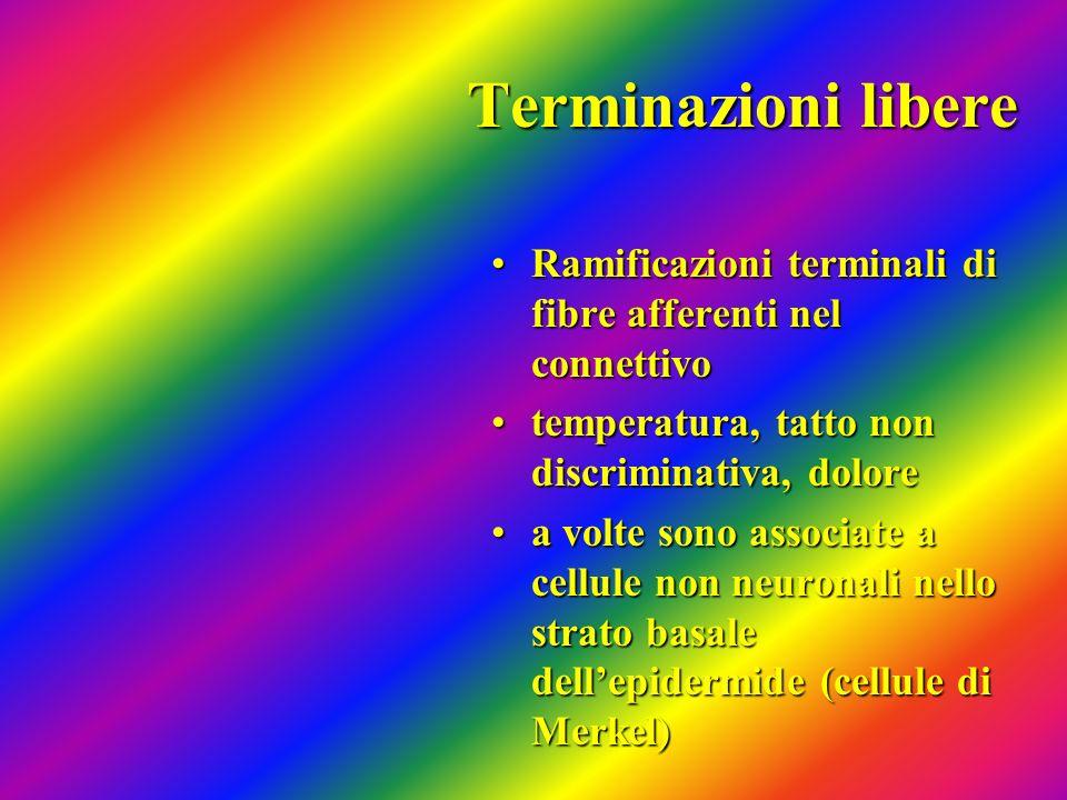 Terminazioni libere Ramificazioni terminali di fibre afferenti nel connettivoRamificazioni terminali di fibre afferenti nel connettivo temperatura, ta