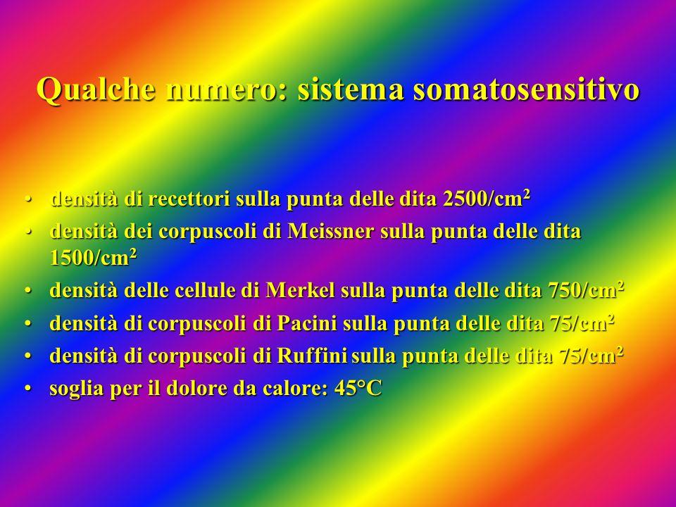 Qualche numero: sistema somatosensitivo densità di recettori sulla punta delle dita 2500/cm 2densità di recettori sulla punta delle dita 2500/cm 2 den