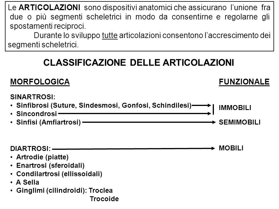 CLASSIFICAZIONE DELLE ARTICOLAZIONI DIARTROSI: Artrodie (piatte) Enartrosi (sferoidali) Condilartrosi (ellissoidali) A Sella Ginglimi (cilindroidi): Troclea Trocoide MOBILI MORFOLOGICAFUNZIONALE SINARTROSI: Sinfibrosi (Suture, Sindesmosi, Gonfosi, Schindilesi) Sincondrosi Sinfisi (Amfiartrosi) SEMIMOBILI IMMOBILI Le ARTICOLAZIONI sono dispositivi anatomici che assicurano lunione fra due o più segmenti scheletrici in modo da consentirne e regolarne gli spostamenti reciproci.