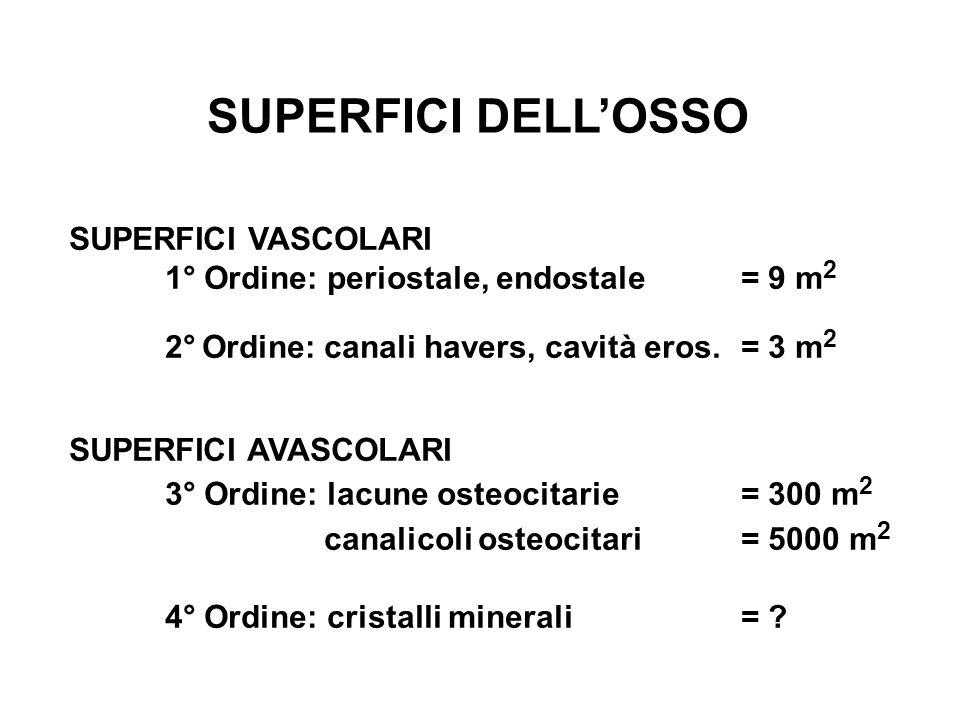 SUPERFICI DELLOSSO SUPERFICI VASCOLARI 1° Ordine: periostale, endostale= 9 m 2 2° Ordine: canali havers, cavità eros.= 3 m 2 SUPERFICI AVASCOLARI 3° Ordine: lacune osteocitarie= 300 m 2 canalicoli osteocitari= 5000 m 2 4° Ordine: cristalli minerali= ?