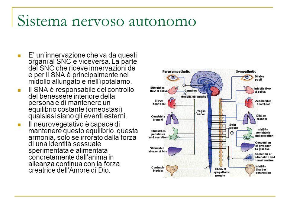 Sistema nervoso autonomo E uninnervazione che va da questi organi al SNC e viceversa. La parte del SNC che riceve innervazioni da e per il SNA è princ