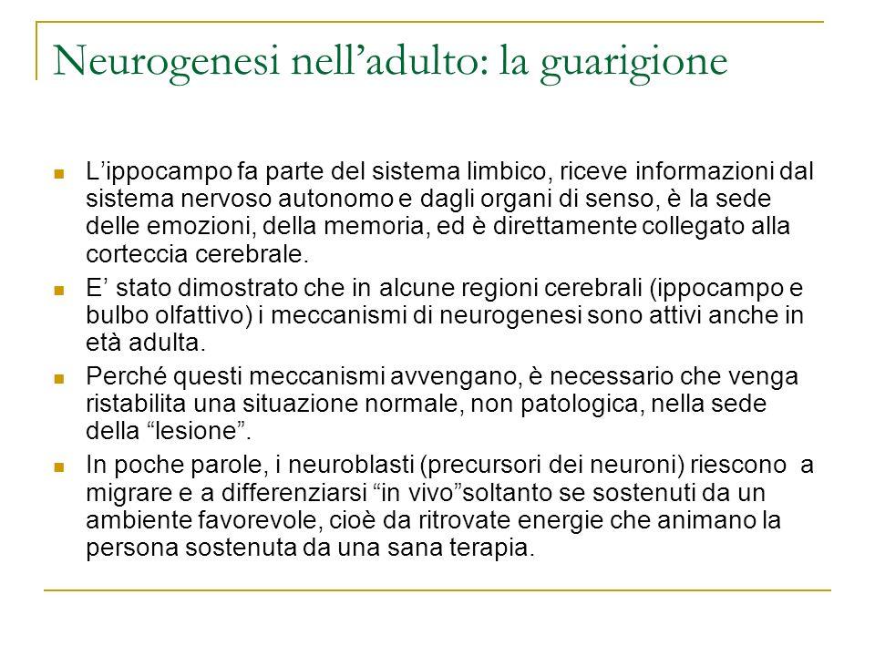 Neurogenesi nelladulto: la guarigione Lippocampo fa parte del sistema limbico, riceve informazioni dal sistema nervoso autonomo e dagli organi di sens