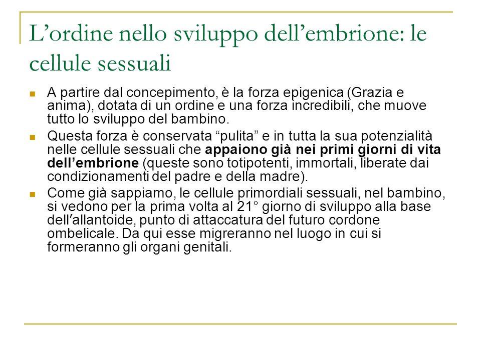 Lordine nello sviluppo dellembrione: le cellule sessuali A partire dal concepimento, è la forza epigenica (Grazia e anima), dotata di un ordine e una
