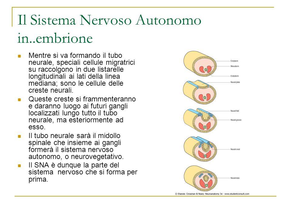 Come si cura il neurovegetativo.
