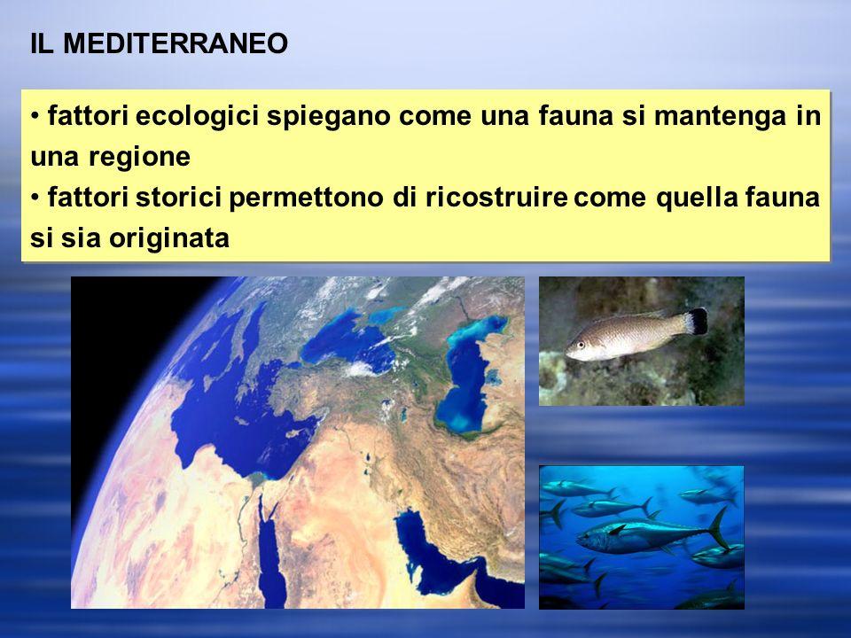 IL MEDITERRANEO fattori ecologici spiegano come una fauna si mantenga in una regione fattori storici permettono di ricostruire come quella fauna si sia originata fattori ecologici spiegano come una fauna si mantenga in una regione fattori storici permettono di ricostruire come quella fauna si sia originata