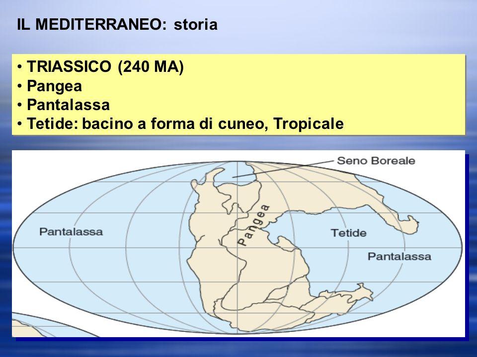IL MEDITERRANEO: storia TRIASSICO (240 MA) Pangea Pantalassa Tetide: bacino a forma di cuneo, Tropicale TRIASSICO (240 MA) Pangea Pantalassa Tetide: bacino a forma di cuneo, Tropicale