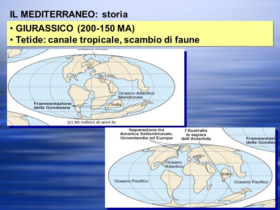 IL MEDITERRANEO: storia GIURASSICO (200-150 MA) Tetide: canale tropicale, scambio di faune GIURASSICO (200-150 MA) Tetide: canale tropicale, scambio di faune