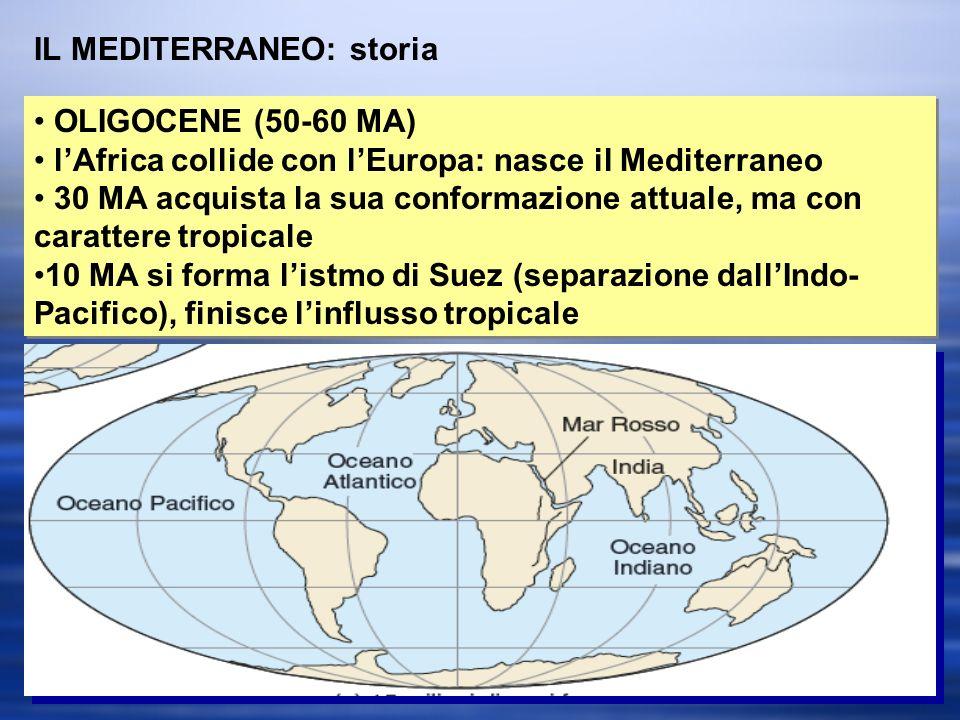 IL MEDITERRANEO: storia OLIGOCENE (50-60 MA) lAfrica collide con lEuropa: nasce il Mediterraneo 30 MA acquista la sua conformazione attuale, ma con carattere tropicale 10 MA si forma listmo di Suez (separazione dallIndo- Pacifico), finisce linflusso tropicale OLIGOCENE (50-60 MA) lAfrica collide con lEuropa: nasce il Mediterraneo 30 MA acquista la sua conformazione attuale, ma con carattere tropicale 10 MA si forma listmo di Suez (separazione dallIndo- Pacifico), finisce linflusso tropicale