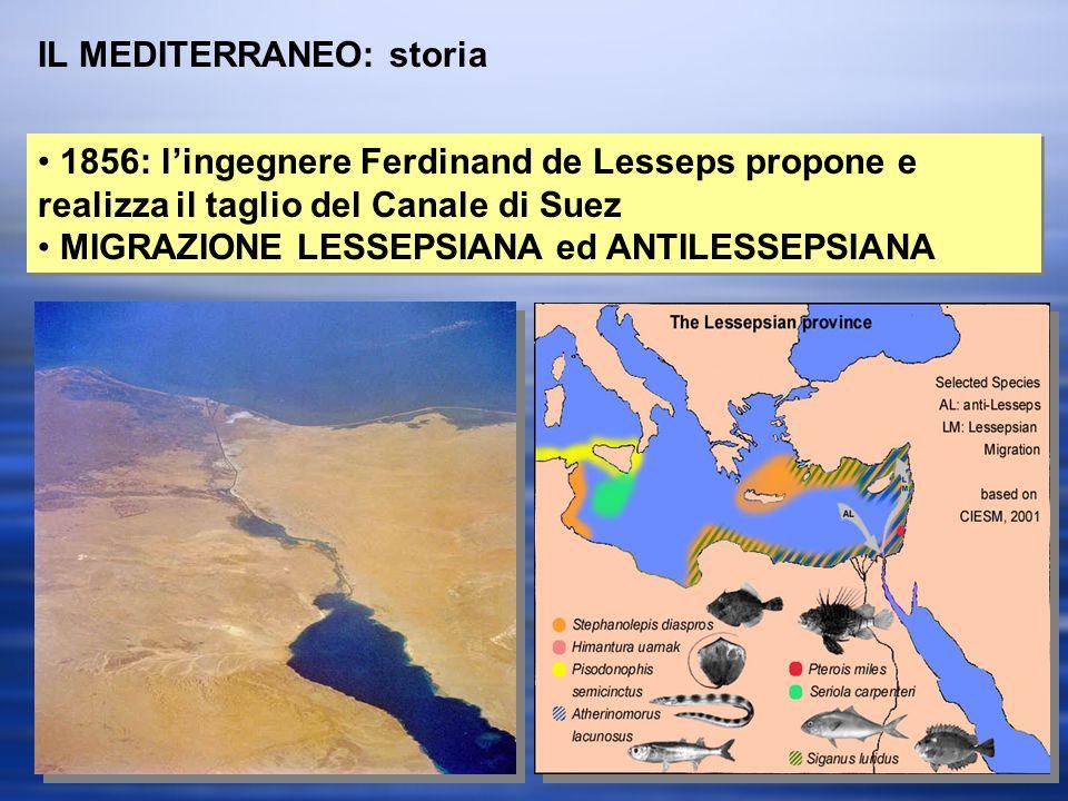 IL MEDITERRANEO: storia 1856: lingegnere Ferdinand de Lesseps propone e realizza il taglio del Canale di Suez MIGRAZIONE LESSEPSIANA ed ANTILESSEPSIANA 1856: lingegnere Ferdinand de Lesseps propone e realizza il taglio del Canale di Suez MIGRAZIONE LESSEPSIANA ed ANTILESSEPSIANA