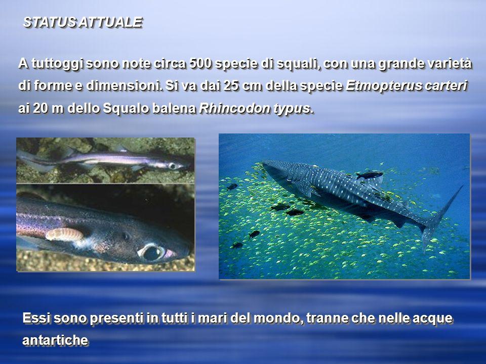 STATUS ATTUALE A tuttoggi sono note circa 500 specie di squali, con una grande varietà di forme e dimensioni.