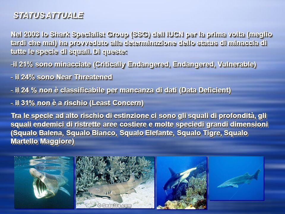 STATUS ATTUALE Nel 2003 lo Shark Specialist Group (SSG) dell IUCN per la prima volta (meglio tardi che mai) ha provveduto alla determinazione dello status di minaccia di tutte le specie di squali.