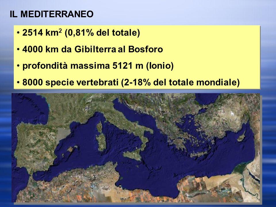 IL MEDITERRANEO 2514 km 2 (0,81% del totale) 4000 km da Gibilterra al Bosforo profondità massima 5121 m (Ionio) 8000 specie vertebrati (2-18% del totale mondiale) 2514 km 2 (0,81% del totale) 4000 km da Gibilterra al Bosforo profondità massima 5121 m (Ionio) 8000 specie vertebrati (2-18% del totale mondiale)