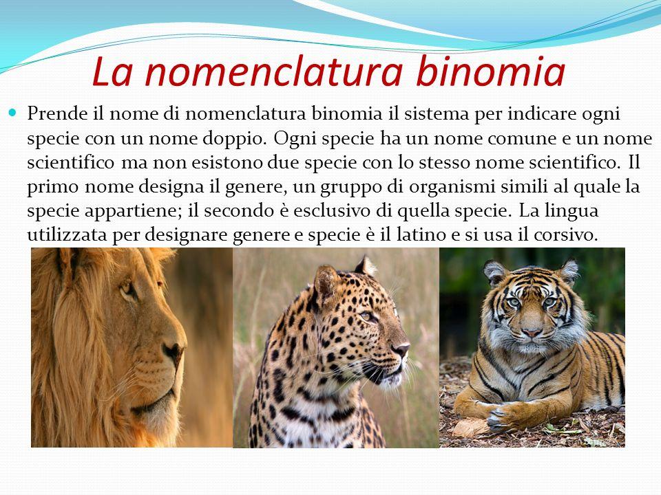 La nomenclatura binomia Prende il nome di nomenclatura binomia il sistema per indicare ogni specie con un nome doppio. Ogni specie ha un nome comune e