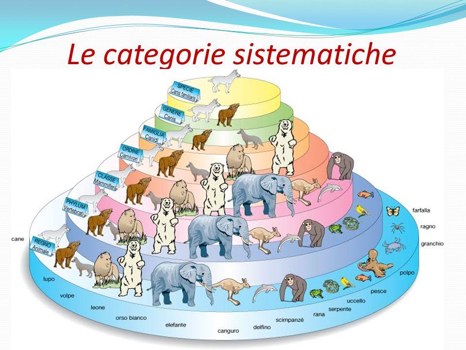 Il sistema di classificazione dei viventi è formato da sette categorie sistematiche principali: specie, genere, famiglia, ordine, classe, phylum e regno.