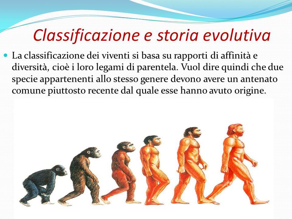 Classificazione e storia evolutiva La classificazione dei viventi si basa su rapporti di affinità e diversità, cioè i loro legami di parentela. Vuol d