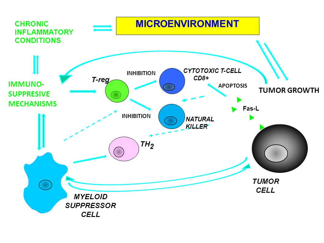 CHRONIC INFLAMMATORY CONDITIONS MICROENVIRONMENT TUMOR GROWTH IMMUNO- SUPPRESIVE MECHANISMS INHIBITION MYELOID SUPPRESSOR CELL Fas-L TUMOR CELL TH 2 T