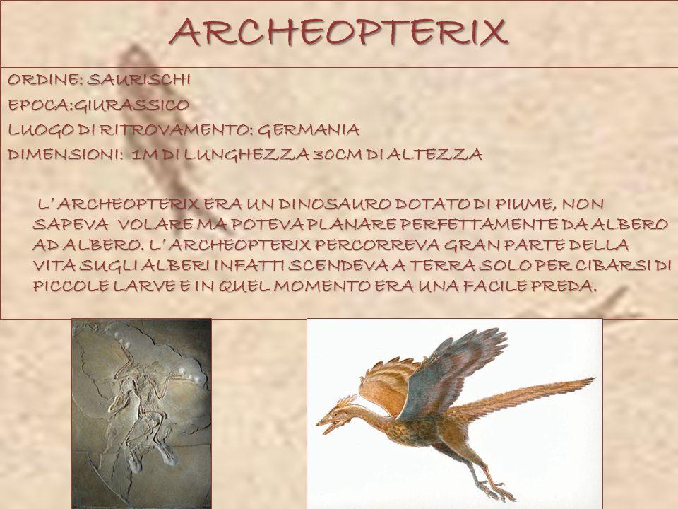 ARCHEOPTERIX ORDINE: SAURISCHI EPOCA:GIURASSICO LUOGO DI RITROVAMENTO: GERMANIA DIMENSIONI: 1M DI LUNGHEZZA 30CM DI ALTEZZA L ARCHEOPTERIX ERA UN DINO