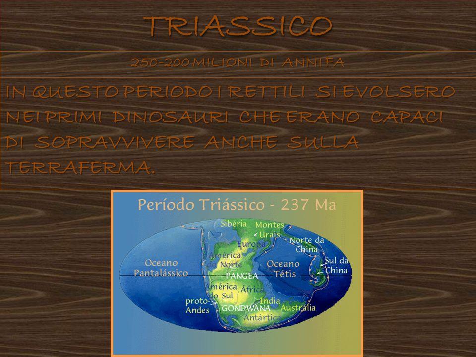 IL TERRITORIO DEL TRIASSICO IN QUESTO PERIODO CERA LA PANGEA.