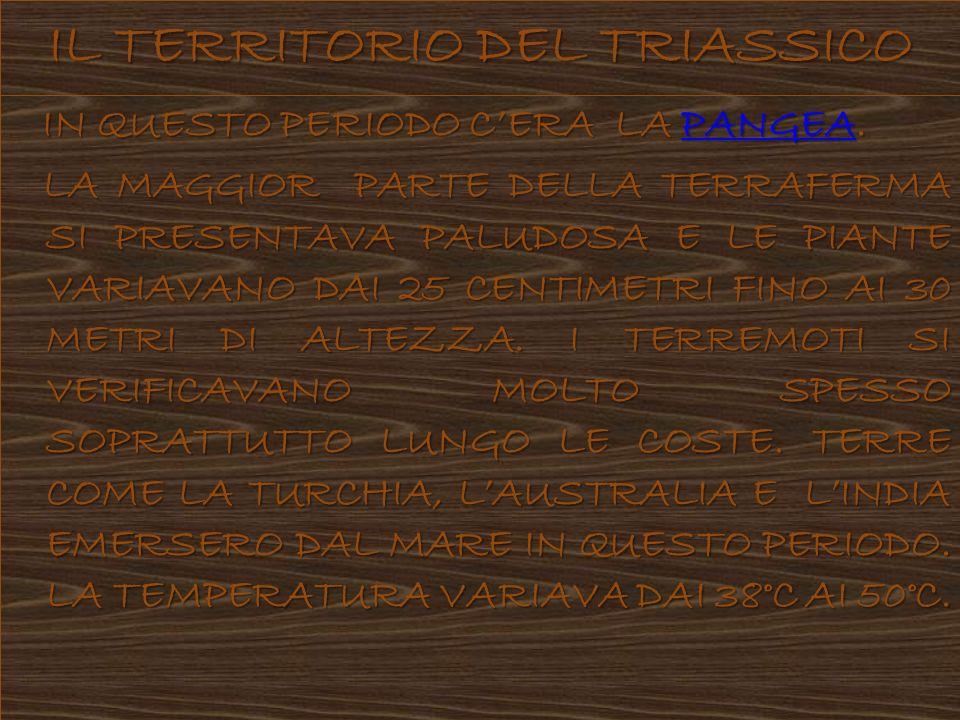 I DINOSAURI I DINOSAURI DEL TRIASSICO SUPERAVANO RARAMENTE I 2,5 METRI DI ALTEZZA.