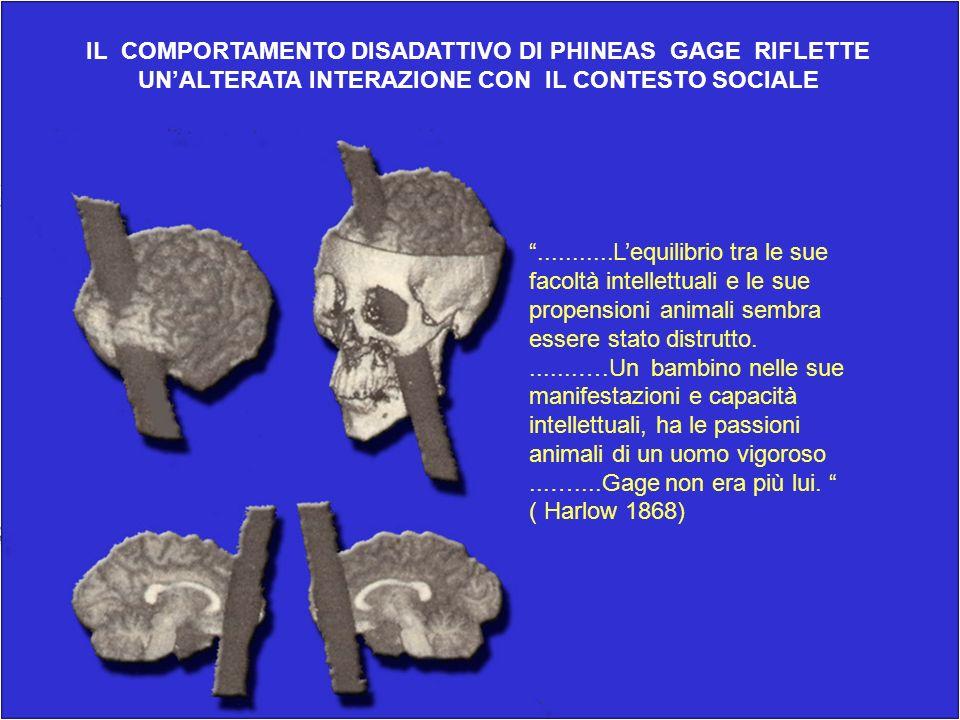 IL COMPORTAMENTO DISADATTIVO DI PHINEAS GAGE RIFLETTE UNALTERATA INTERAZIONE CON IL CONTESTO SOCIALE...........Lequilibrio tra le sue facoltà intellet