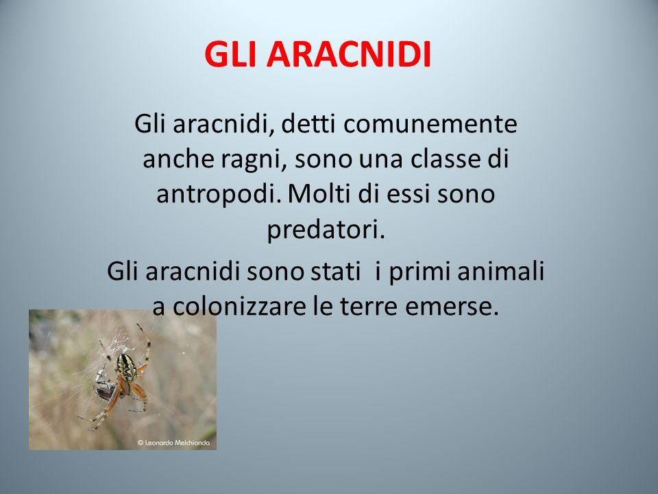 GLI ARACNIDI Gli aracnidi, detti comunemente anche ragni, sono una classe di antropodi.