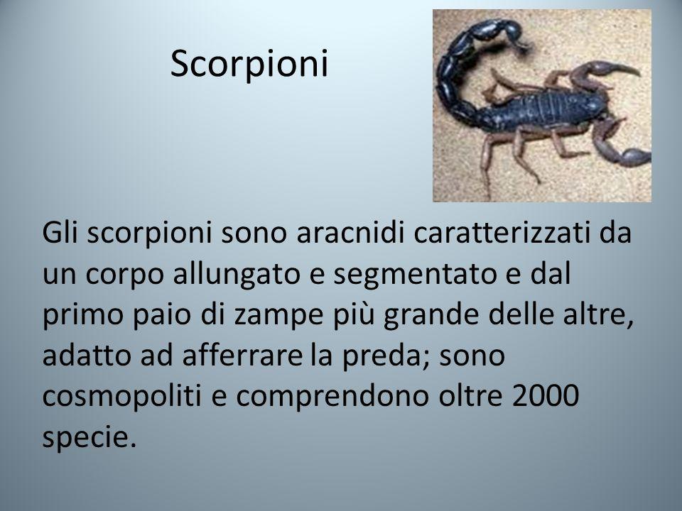 Scorpioni Gli scorpioni sono aracnidi caratterizzati da un corpo allungato e segmentato e dal primo paio di zampe più grande delle altre, adatto ad afferrare la preda; sono cosmopoliti e comprendono oltre 2000 specie.