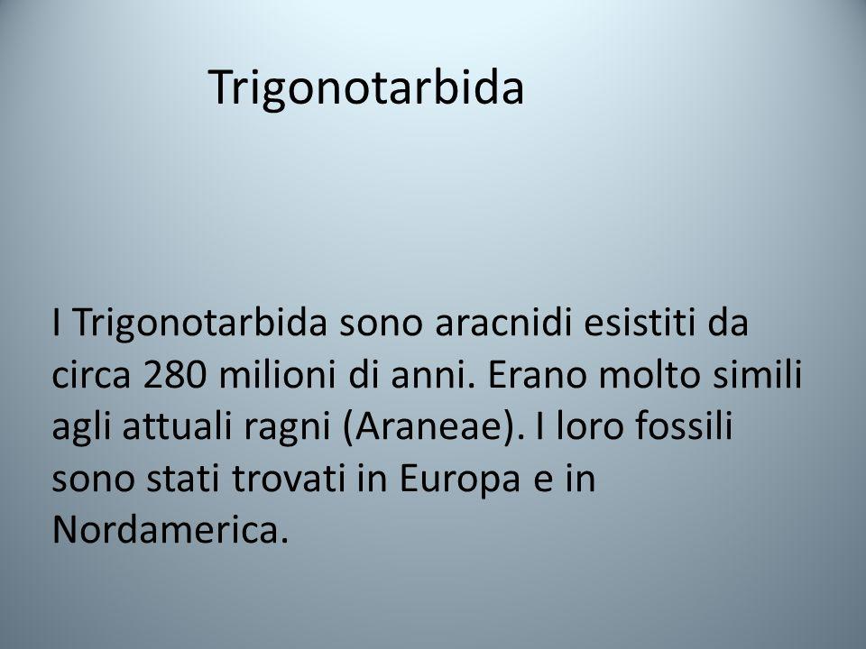 Trigonotarbida I Trigonotarbida sono aracnidi esistiti da circa 280 milioni di anni.