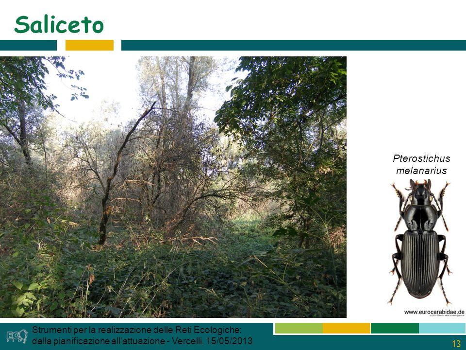13 Saliceto Strumenti per la realizzazione delle Reti Ecologiche: dalla pianificazione allattuazione - Vercelli, 15/05/2013 Pterostichus melanarius