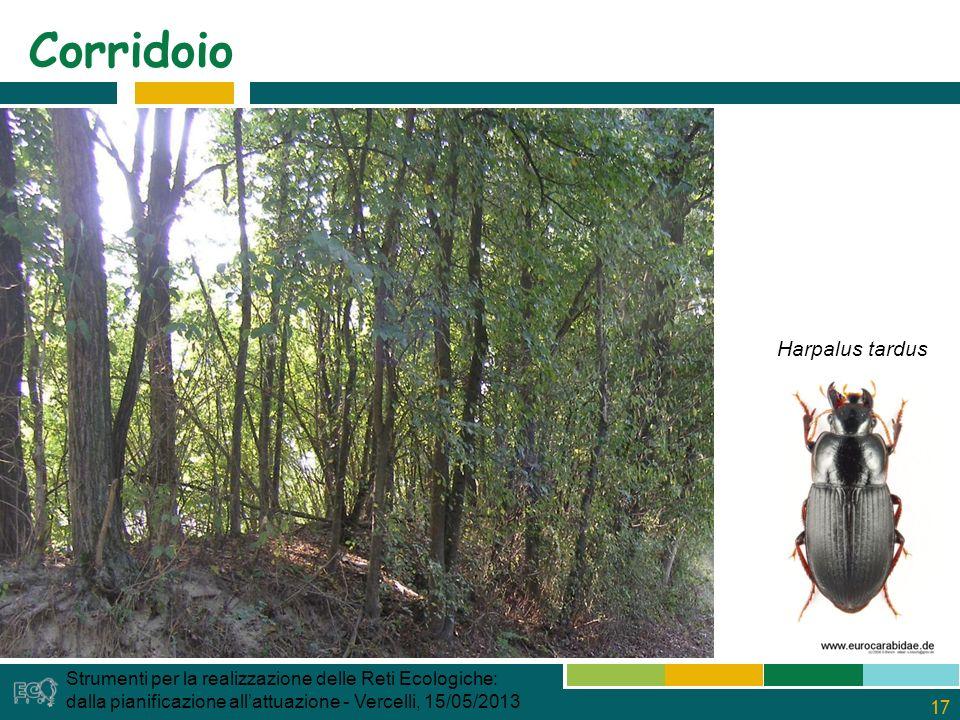 17 Corridoio Strumenti per la realizzazione delle Reti Ecologiche: dalla pianificazione allattuazione - Vercelli, 15/05/2013 Harpalus tardus
