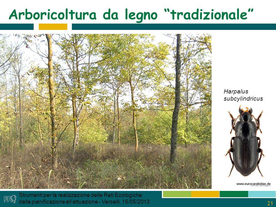 21 Arboricoltura da legno tradizionale Strumenti per la realizzazione delle Reti Ecologiche: dalla pianificazione allattuazione - Vercelli, 15/05/2013 Harpalus subcylindricus