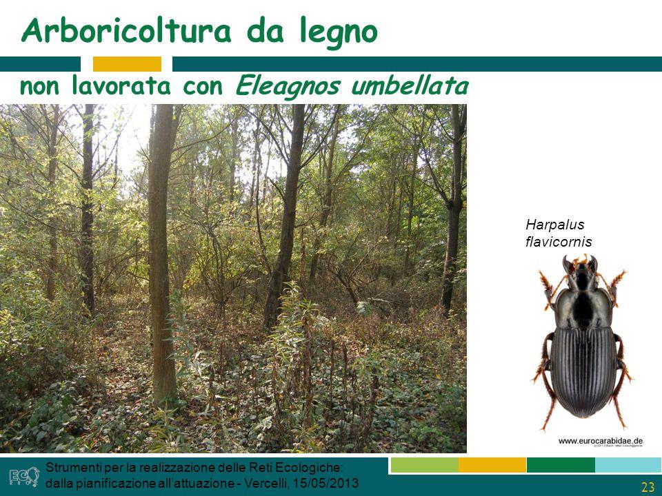 23 Arboricoltura da legno non lavorata con Eleagnos umbellata Strumenti per la realizzazione delle Reti Ecologiche: dalla pianificazione allattuazione - Vercelli, 15/05/2013 Harpalus flavicornis
