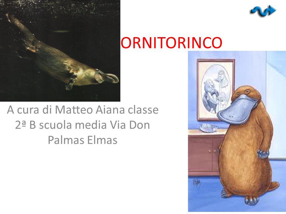 L ORNITORINCO A cura di Matteo Aiana classe 2ª B scuola media Via Don Palmas Elmas
