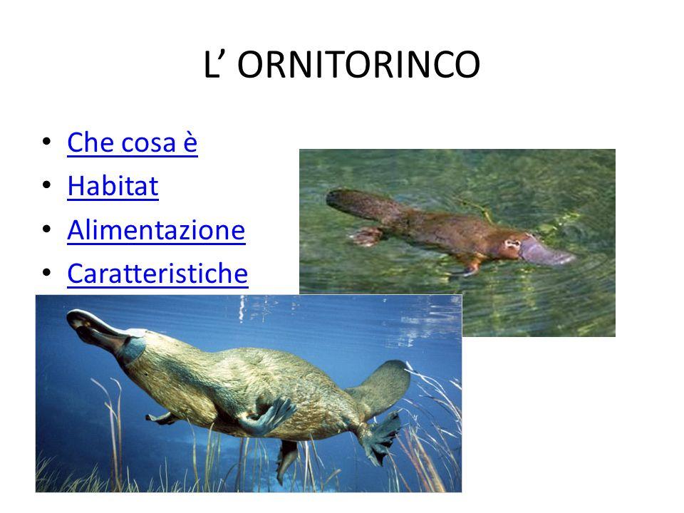 Che cosa è L ornitorinco è un piccolo mammifero semi-acquatico endemico della parte orientale dell Australia.