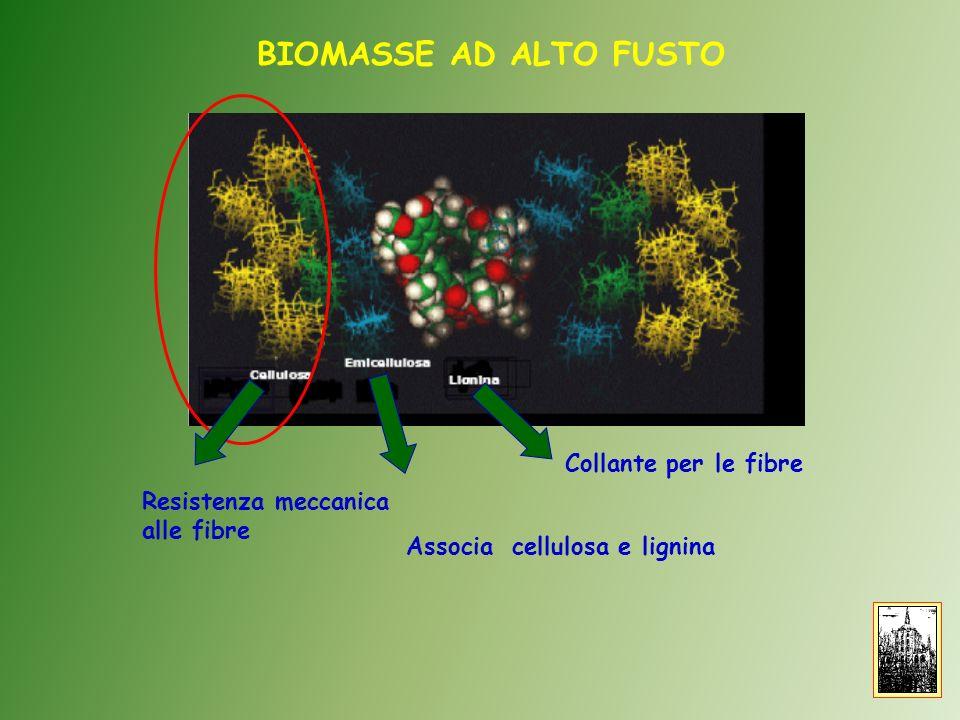BIOMASSE AD ALTO FUSTO Collante per le fibre Associa cellulosa e lignina Resistenza meccanica alle fibre