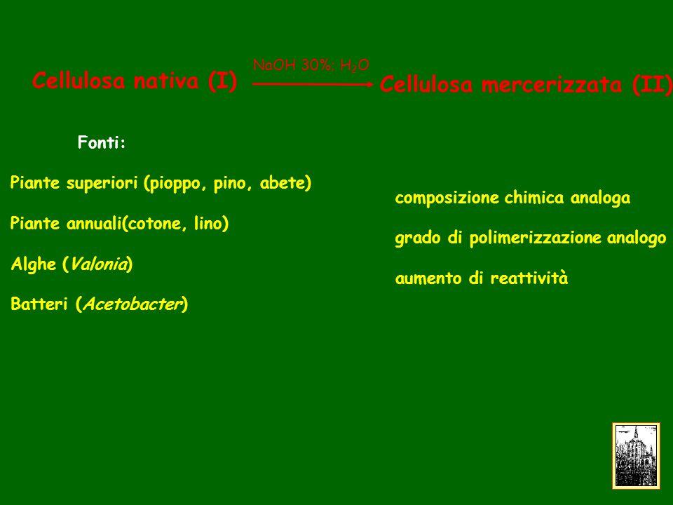 Cellulosa nativa (I) Fonti: Piante superiori (pioppo, pino, abete) Piante annuali(cotone, lino) Alghe (Valonia) Batteri (Acetobacter) Cellulosa mercerizzata (II) composizione chimica analoga grado di polimerizzazione analogo aumento di reattività NaOH 30%; H 2 O