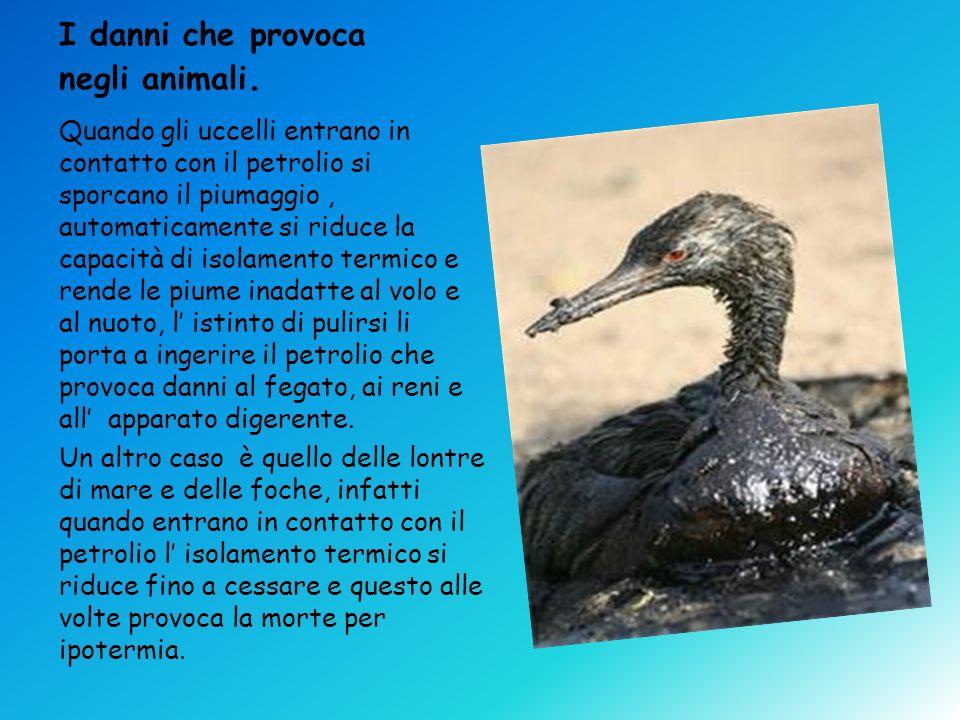 I danni che provoca negli animali. Quando gli uccelli entrano in contatto con il petrolio si sporcano il piumaggio, automaticamente si riduce la capac