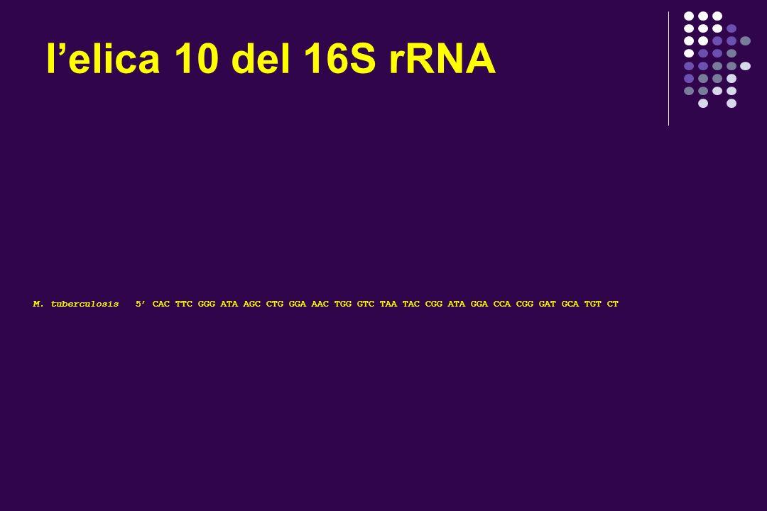 il 16S rRNA