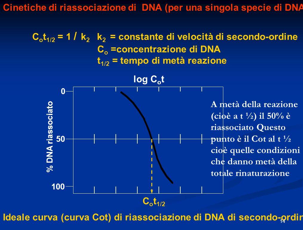 Cinetiche di riassociazione di DNA (per una singola specie di DNA) C o t 1/2 = 1 / k 2 k 2 = constante di velocità di secondo-ordine C o =concentrazione di DNA t 1/2 = tempo di metà reazione C o t 1/2 50 100 0 % DNA riassociato log C o t Ideale curva (curva Cot) di riassociazione di DNA di secondo-ordine A metà della reazione (cioè a t ½) il 50% è riassociato Questo punto è il Cot al t ½ cioè quelle condizioni che danno metà della totale rinaturazione 14