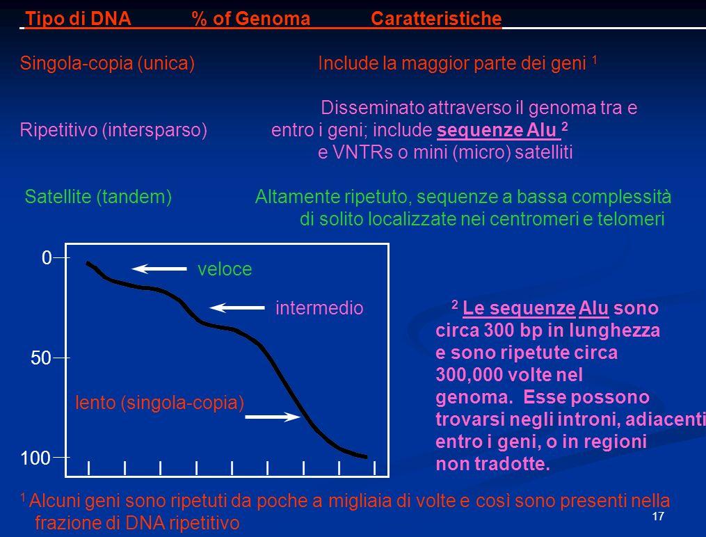 Tipo di DNA % of Genoma Caratteristiche Singola-copia (unica) Include la maggior parte dei geni 1 Disseminato attraverso il genoma tra e Ripetitivo (intersparso) entro i geni; include sequenze Alu 2 e VNTRs o mini (micro) satelliti Satellite (tandem) Altamente ripetuto, sequenze a bassa complessità di solito localizzate nei centromeri e telomeri 2 Le sequenze Alu sono circa 300 bp in lunghezza e sono ripetute circa 300,000 volte nel genoma.